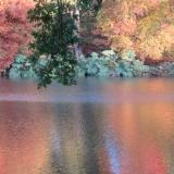 Autumn Trees - November - Online